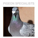 PIGEONS-SPECIALISTS