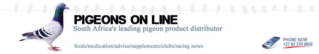 pigeons-on-line-header-black-dec4